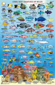 Pin By Waco Merchant On Scuba Diving In 2019 Fish Chart