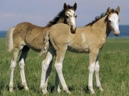 beautiful baby horses wallpaper. Modren Horses Donkey  Horse WallpaperAnimal WallpaperHd WallpaperBaby  With Beautiful Baby Horses Wallpaper S