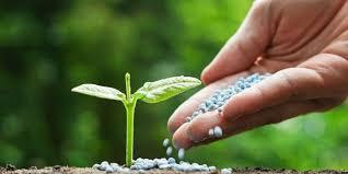 Alaska Fish Fertilizer Feeding Chart Best Garden Fertilizer 2019 Organic Low Nitrogen Npk