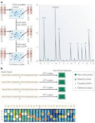 Dna Sequence Chart Dna Sequencing Technologies Learn Science At Scitable