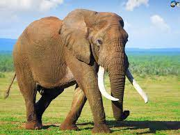 Indian Elephant Wallpapers - Top Free ...
