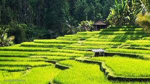 Top 10 Attractions in Ubud