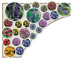 Small Picture Butterfly Garden Zone 5 8 13 varieties 24 plants Layout for 9