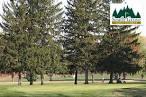 South Grove Golf Course | Indiana Golf Coupons | GroupGolfer.com