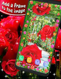 3d Red Rose Live Wallpaper Download