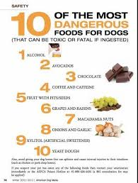 Raw Food Diet For Dogs For The Love Of Dobermans
