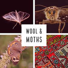 natural moth proofing naturlich flooring