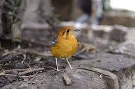 zoo: Ginger bird | Bird, Tiny bird, Black bird
