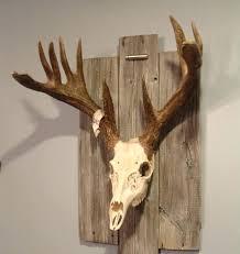 moose antlers mount 7 moose shed antler mounting kit