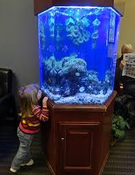 office aquarium. DSC04900 Office Aquarium