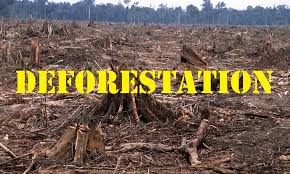essay on deforestation short essay on deforestation deforestation essay on deforestation