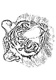 Coloriage F Lins Tigres Lions Panth Res Sur Hugolescargot Com S Dessin Coloriage Lion Et TigreL