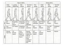 Normal Gait Cycle Physical Therapy Physical Therapy