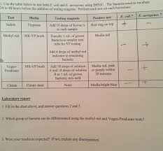 Imvic Chart Solved 1 Use The Table Below To Test Both E Coli And E Ae