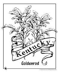 Small Picture Kentucky State Flower Coloring Page Woo Jr Kids Activities