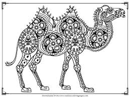 Small Picture Coloring Pages Animals Camel Coloring Pages For Adults Camel