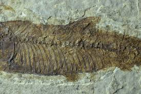 Need To Identify A Fossil Theres An App For That Fossils