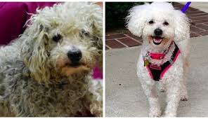 your dog s matted hair isn t just uncomfortable it s dangerous