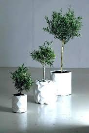 modern flower pots large indoor planters plant best uk