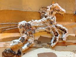 Birch Bark Horse, Honoring Native American Horse Nations