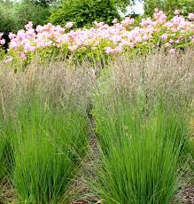 Tall Decorative Grass Ornamental Grasses 10 Great Ones For Your Sunny Garden