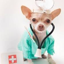 Image result for sick pet