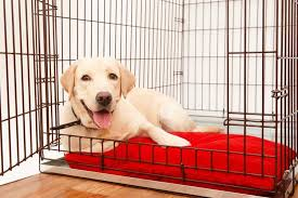 the best large dog crates 2019 reviews
