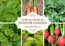 craving fresh harvests during the winter or lack outdoor gardening space then start an indoor
