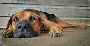 Image result for sick pets