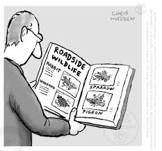 roadside wildlife roadkill cartoon