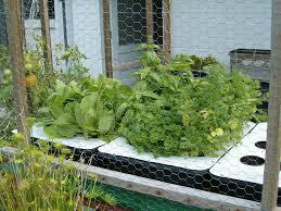 Kitchen Garden Blog Hydroponic Vegetable Garden Ihidrousacom Blog News Nutritional