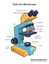 What Kind Of Light Source Is On A Microscope Microscope Diagram Labeled Unlabeled And Blank Parts Of A