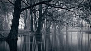 wide hd dark forest wallpaper wallpapers and pictures hd quality for desktop and mobile