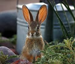 keep squirrels rabbits and other rodents out of the garden