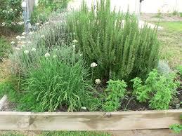 Herb Garden Garden Express Garden Forums O View Topic Herb Garden In Summer