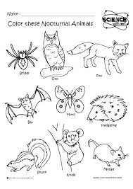Small Picture Coloring Pages Of Nocturnal Animals Coloring Coloring Pages