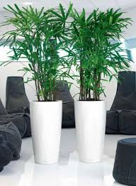 office plant displays. Plants For Offices Hertfordshire Office Plant Displays