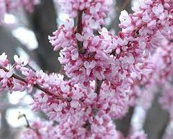 12 best trees to plant in southwestern