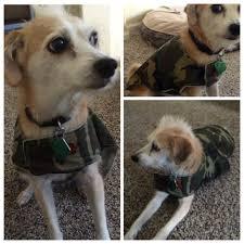 mona dog coat 4