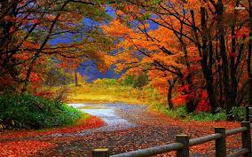 Free download Autumn Forest Road HD ...