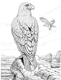 Small Picture Coloring Page Eagle Coloring Page Eagle Free Printable Bald Pages