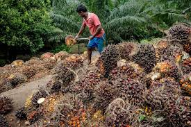 Palm Oil Caps Longest Quarterly Slump On Record As Supply