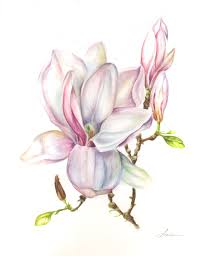Magnolia 50x70 Cm Watercolour Wwwaracelirequenabe Tattoo