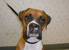 dogs with cleft palates