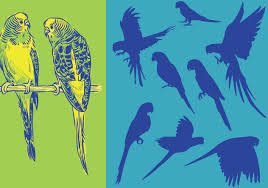 silhouettes parrots free vector