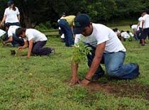 Resultado de imagen para reforestacion