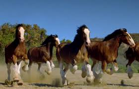 watch 20 years of budweiser clydesdale