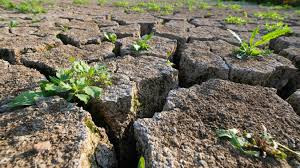Sécheresse: des aides supplémentaires pour les agriculteurs et les éleveurs