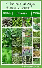 Herb Plant Identification Chart Fresh Herbs Annual Biennial Or Perennial The Gardening