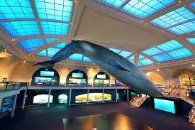 Resultado de imagem para imagens de AMERICAN MUSEUM OF NATURAL HISTORY